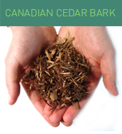 canadian_cedar_bark